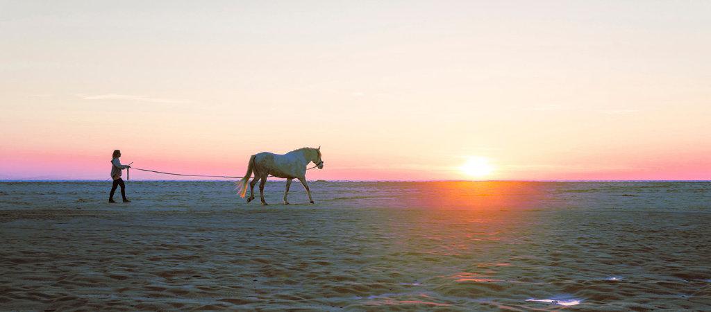 cavallo_futuro